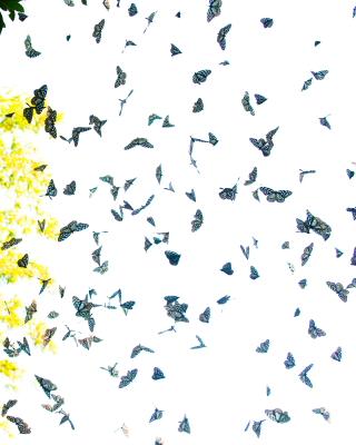 萤火虫竖笛6孔谱子